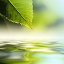 green-leaf-ripple1
