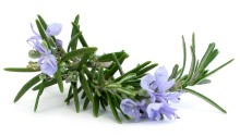 uses-of-rosemary